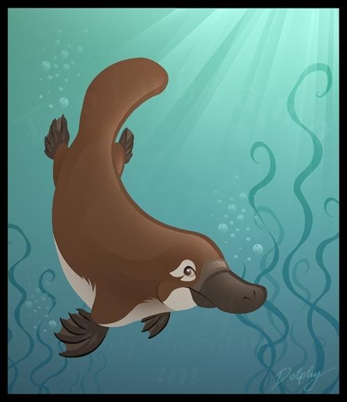 Platypus-platypus-7167286-500-579.jpg