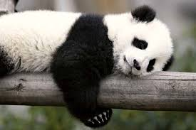 I_Eat_Pandas